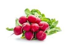 Radish. Bunch of organic radish isolated on white background Stock Photography