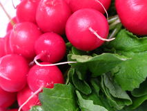 Radish bunch zoom Stock Images