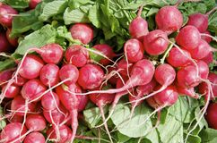 Radish Royalty Free Stock Photography