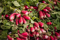 Radish bunches. A pile of radish bunches at a farmer's market in San Francisco Royalty Free Stock Photo