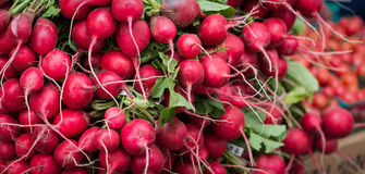 Radish bunches Stock Images