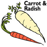 Radish Carrot Set Royalty Free Stock Images