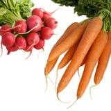 Radish, carrots. Fresh radish with carrots isolated on white background Stock Photography