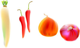 Radish, chili, onion. Illustration, vector for a variety of vegetables, radish, chili, onion Stock Image