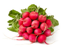Radish cluster Royalty Free Stock Photography