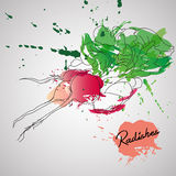 Radish with color splash  Royalty Free Stock Photos