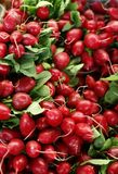 Radish colorful and fresh royalty free stock photography