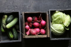 Radish, cucumbers and cabbage. Raw Organic food on a kitchen table. Raw Organic food on an old wooden table. Or healthy food idea Royalty Free Stock Photo