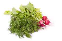 Radish and dill across white Royalty Free Stock Photos