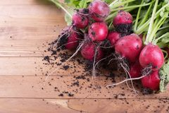 Radish directly from the garden. Fresh garden radish. Top view with place for text Royalty Free Stock Image