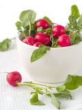 Radish do jardim foto de stock royalty free