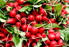 Radish do jardim Fotos de Stock Royalty Free
