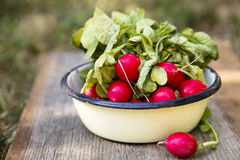 Radish. Fresh radish in enamel bowl Stock Image