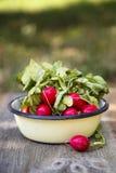 Radish. Fresh radish in enamel bowl Stock Images
