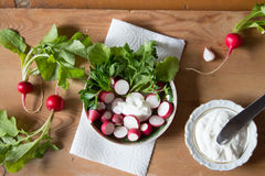 Radish with fresh herbs and sour cream. Vitamin salad with parsl Stock Images