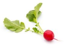Radish fresh isolated on white background. Radish fresh isolated on  white background Stock Photo