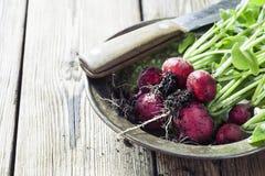 Radish. Fresh radishes on wooden background Stock Photography
