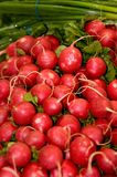 Radish and green onion Royalty Free Stock Images