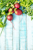 Radish and greenery on a blue wooden table Stock Image