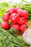 Radish and greens Royalty Free Stock Photos