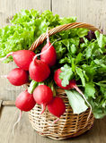 Radish and Greens in a Wicker Basket Royalty Free Stock Photos