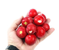Radish in hand Royalty Free Stock Photos