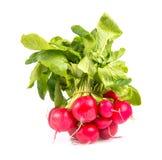 Radish Stock Images