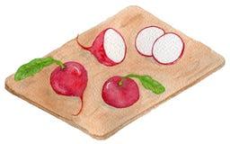 Delicious Mexican radish vector illustration