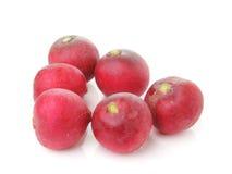 Radish isolated on white background. Fresh radish isolated on white background Stock Images