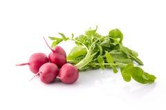 Radish isolated on the white background. Fresh radish isolated on the white background Stock Photos