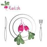 Radish with leaf on plate. Hand drawn watercolor. Radish with leaf on plate with knife and fork. Hand drawn watercolor painting on white background. Vector Stock Images