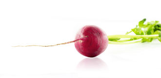 A radish with leafs Royalty Free Stock Photography