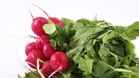 Radish with leaves stock footage