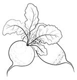 Radish with leaves, contours Royalty Free Stock Photos