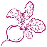 Radish with leaves, pictogram. Vegetable, red radish with leaves, symbolical monochrome pictogram Royalty Free Stock Image