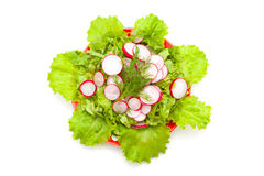 Radish and lettuce. Low-calorie salad with radishes and fresh lettuce with olive oil Royalty Free Stock Image