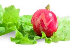 Radish with lettuce Stock Photo