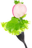 Radish lettuce and rucola on fork Stock Images