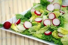 Radish and lettuce salad Stock Image