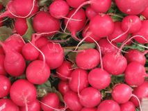 Radish. a lot of radishes. bazaar. vegetables for sale. fresh vegetables. large radish. stock photography