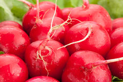 Radish macro Royalty Free Stock Photos