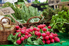 Radish at market Royalty Free Stock Photo