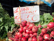 Radish. On a market with price tag Stock Photography