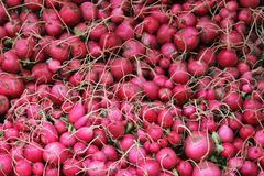 Radish at the market stall. A pile of red Radish at the market stall Royalty Free Stock Image