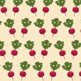 Radish nutrition seamless pattern image. Vector illustration eps 10 Royalty Free Stock Images