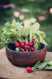 Radish in an old wooden bowl. In the garden Stock Images