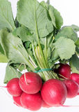 Radish. Over a white background Royalty Free Stock Photo