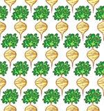 Radish pattern. Radish seamless pattern. Vegetable endless texture background Stock Photo