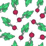 Radish pattern. Vegetarian food. Hand drawn radish seamless pattern. Vector vintage vegetables illustration.  For wrapping paper, street festival, farmers market Stock Image