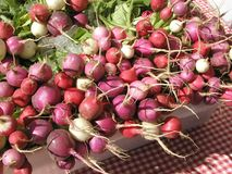 Radish on picnic cloth. Farmers market colorful pink red fresh summer Royalty Free Stock Images